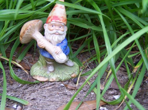 Henry the fairy garden gnome