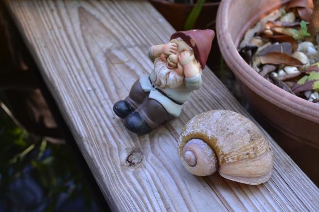 former snail friend